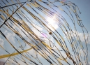 Kite4Life_025